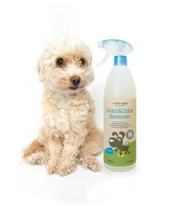 Unscented Pet Stain & Odor Remover